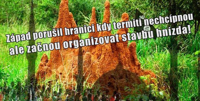 termitiste_up